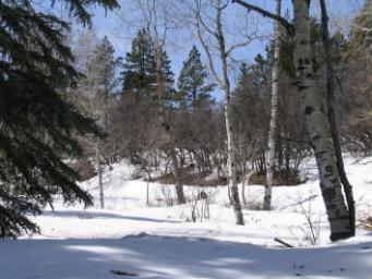 rito blanco forest land