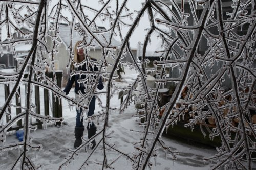 ice storm; Tay behind tree