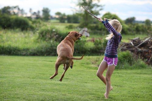the magic flying dog #5