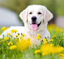 How to protect and lengthen your pets' life