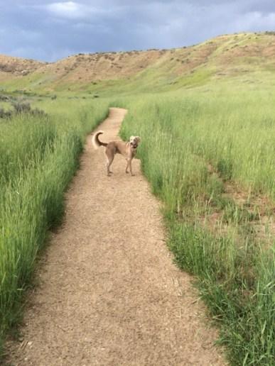 2. Highland 2_Hollow Trail, June, 2015, Boise, Idaho