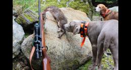 dealys-gun-dog-c