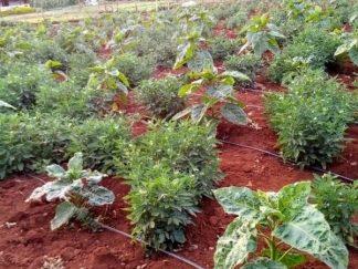 Agribusiness in Kenya