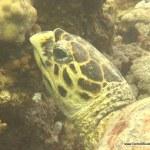 red-sea-diving_020212_0373.jpg