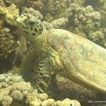 red-sea-diving_020212_0379.jpg