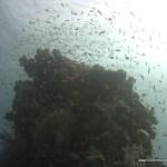 red-sea-diving_020212_0416.jpg