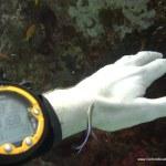 red-sea-diving_020212_0420.jpg