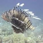 red-sea-diving_280112_0198.jpg