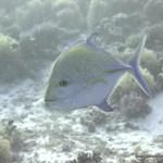 red-sea-diving_280112_0203.jpg