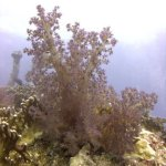 red-sea-diving_290112_0094.jpg