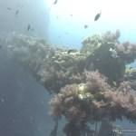 red-sea-diving_310112_0331.jpg
