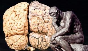 Denker-Gehirn