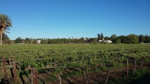 Vineyards-300x169