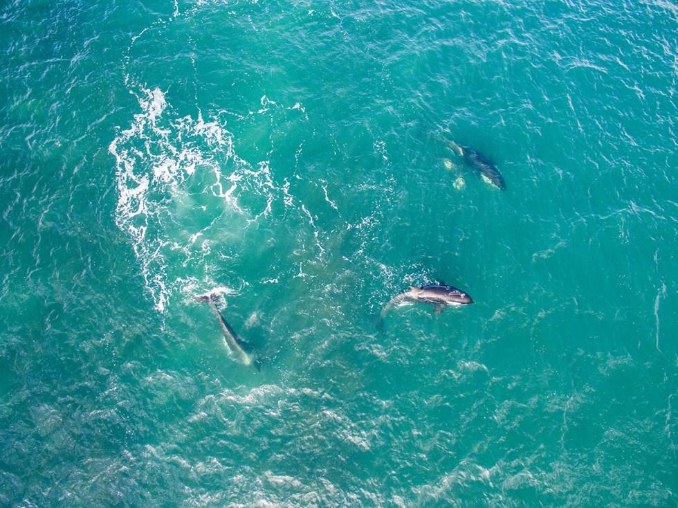 Orca 3 blog