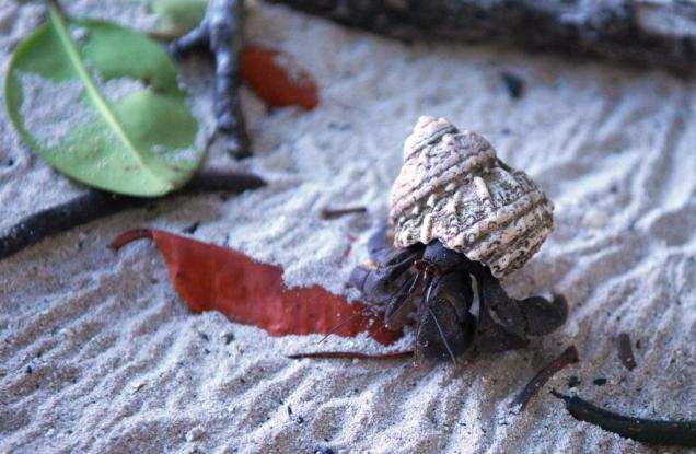 7-notre-copain-bernard-l-hermite