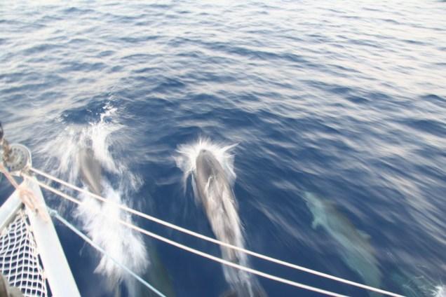visite-dauphins