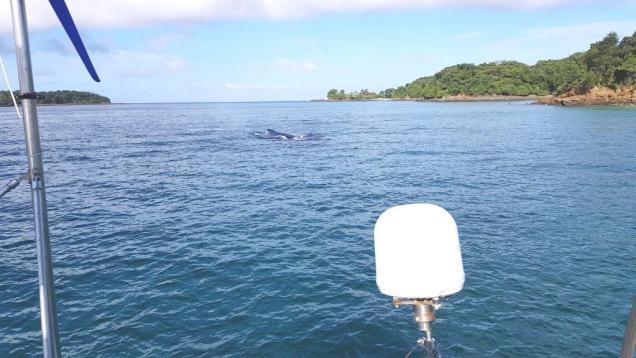 13 Chapera Baleine