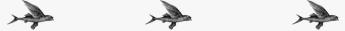 flying-fish-border02.jpg