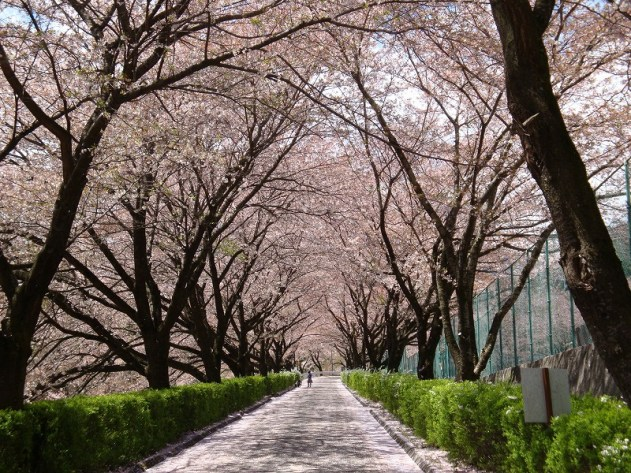 与田切公園