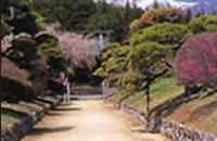 西岸寺 恵比寿さまを祀り、幕府の庇護を受けた格式高いお寺。参道の松並木がみごとです。