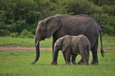 象VSライオン、一対一で闘わせるとどっちが強いのか徹底調査
