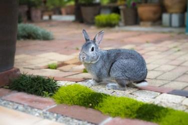 ウサギのケージの掃除の仕方と道具を紹介。頻度や選ぶポイントも