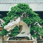 小林國雄盆栽職人の年収・経歴!作品のある春花美術園はどこ?
