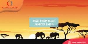 Jobs at African Wildlife Foundation in Kenya