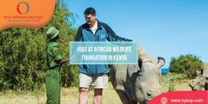 Jobs at African Wildlife Foundation in Kenya Position: Graphic and Multimedia Designer Officer