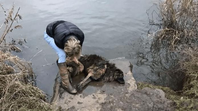 Una perrita fue rescatada de un río al que la arrojaron amarrada de una piedra