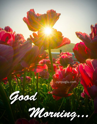 Good Morning Flower Images 50 Pic Free Download Hd