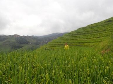 Terrasses des Yao | Yao terraces
