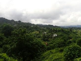 Vegetation luxuriante | Lush vegetation