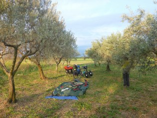 Camping sous les olivier | Camping under olive tree