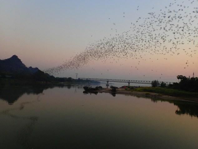 Hpa-an : le soir à heure fixe, des milliers de chauve-souris sortent d'une grotte | In the evening at a fixed hour, thousands of bats come out their cave