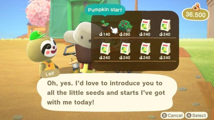 Leif Pumpkin Starts.jpg