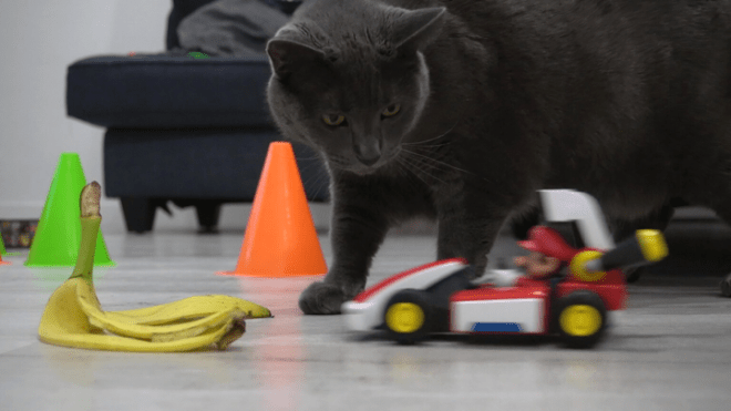 Bruce-the-cat-720x405 Mario Kart Live: Home Circuit Review | IGN