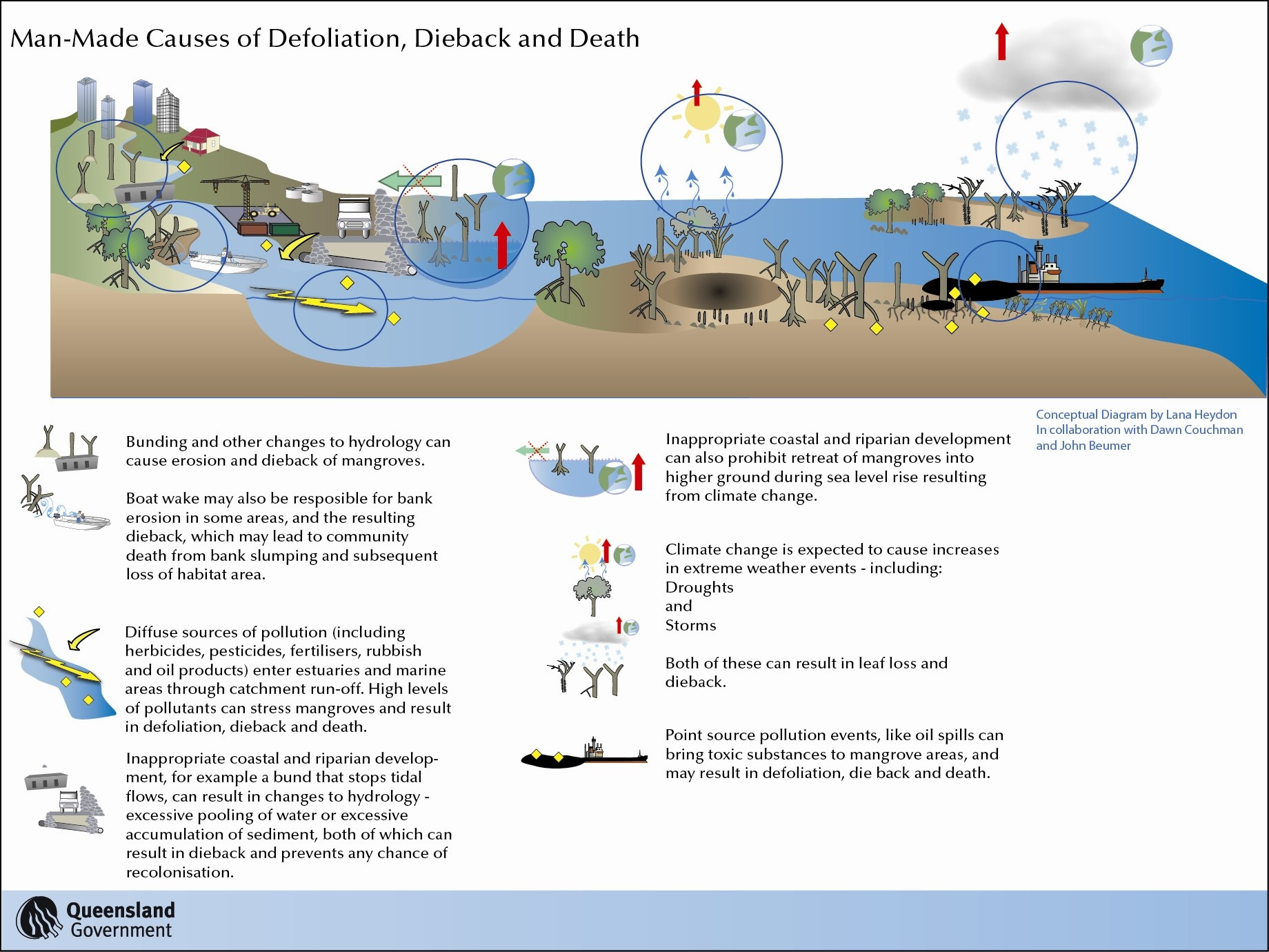 Mangrove Community Dynamics