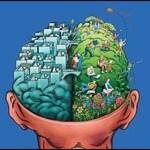 Beyninizin hangi bölümünü kullanıyorsunuz?