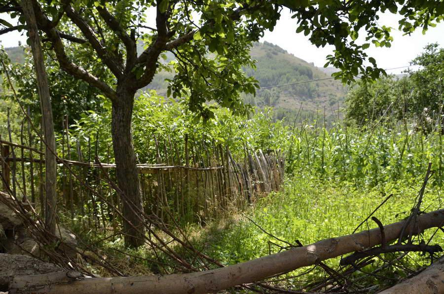 Ahıraltı: Karadeniz köylüsünün sebze bahçesi cablama denilen çit ile çevrili