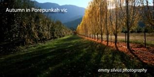Autumn in Porepunkah - canvas 100x50cm_cr