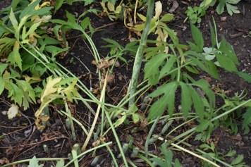 cut stems