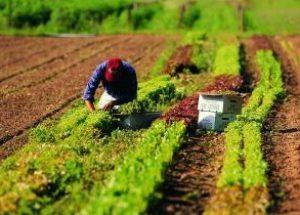 L'ozono trova sempre più applicazioni in campo agricolo