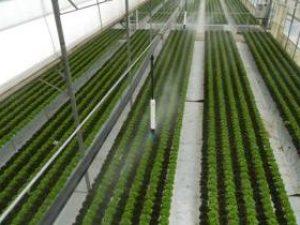 L'ozono può avere diversi usi in campo agricolo