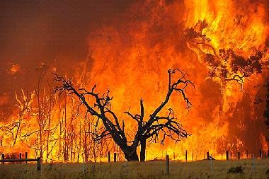 原因 オーストラリア 山 火事