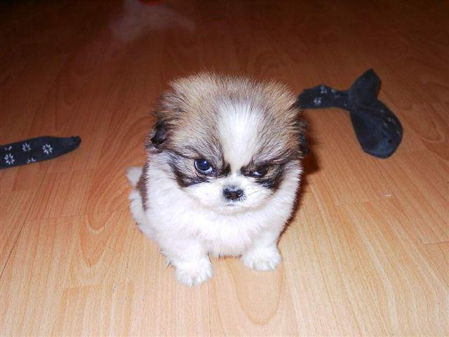 grumpy-pup1