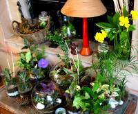 house plants arrangements - Design Decoration