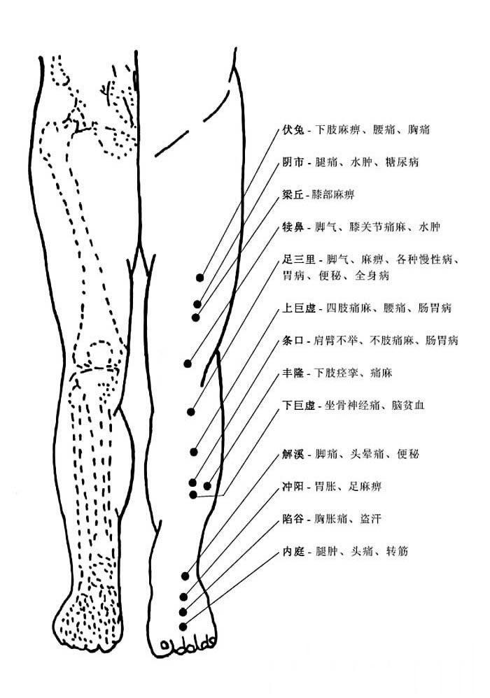 腿部正面穴位和穴位功能