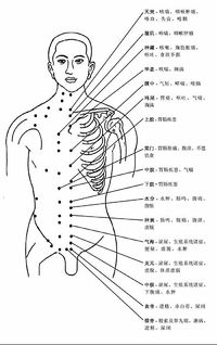 人體穴位圖 - A+醫學百科