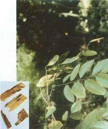 降香,降香的功效與作用_中藥降香_降香是什麼_降香的用法用量_A+醫學百科